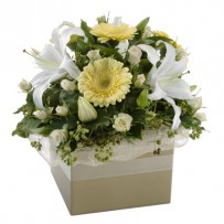 White Sympthay Box