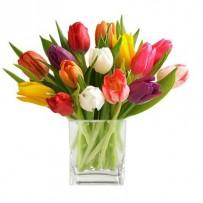 15-Stem Mixed Tulip Bouquet
